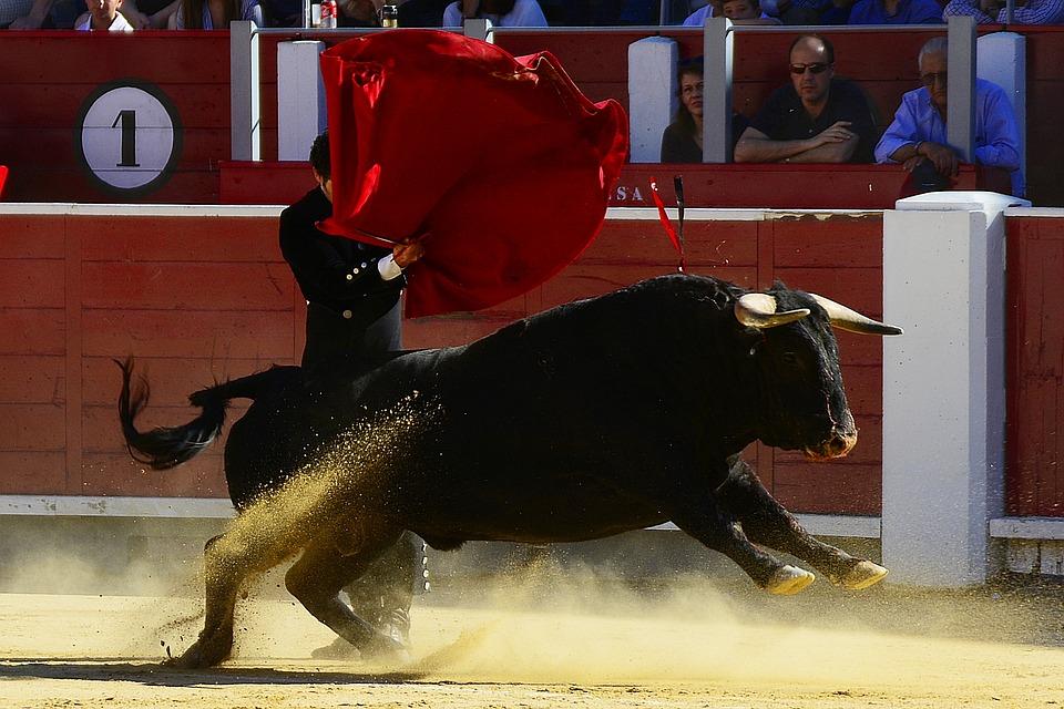 bulls-2341110_960_720